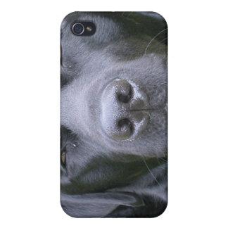 Caja negra del iPhone 4 del perro del labrador ret iPhone 4 Fundas