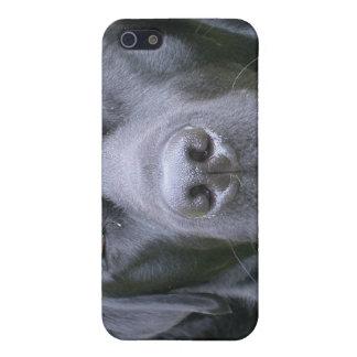 Caja negra del iPhone 4 del perro del labrador ret iPhone 5 Cárcasa