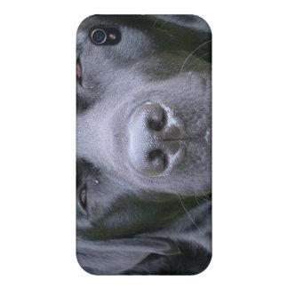 Caja negra del iPhone 4 del perro del labrador ret iPhone 4 Cobertura