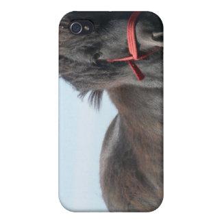 Caja negra del iPhone 4 del potro iPhone 4 Protector