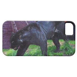 Caja negra del iPhone 5 de la fantasía de Jaguar Funda Para iPhone 5 Barely There