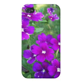 Caja púrpura del iPhone 4 de la flor iPhone 4 Cobertura