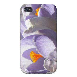 Caja púrpura del iPhone 4 de la mota del azafrán iPhone 4 Fundas
