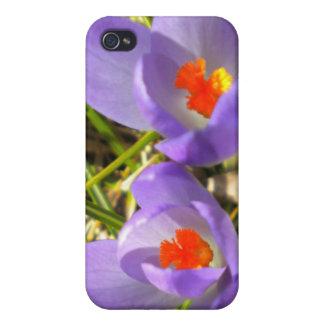 Caja púrpura del iPhone 4 del azafrán iPhone 4 Carcasa
