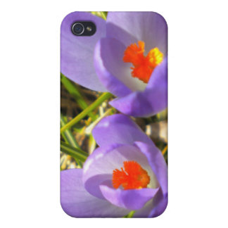 Caja púrpura del iPhone 4 del azafrán iPhone 4/4S Funda