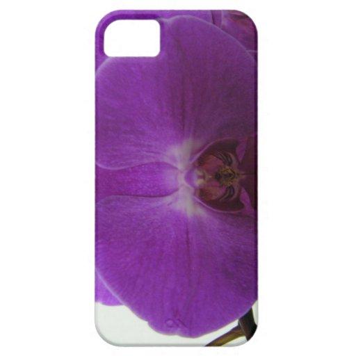 Caja púrpura del iPhone 5 de la orquídea iPhone 5 Protector