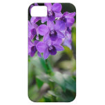 Caja púrpura del iPhone 5 de la orquídea iPhone 5 Coberturas