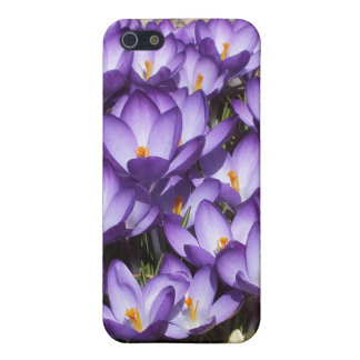 Caja púrpura del iPhone 5 de las azafranes iPhone 5 Carcasa