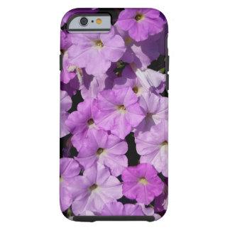 Caja púrpura del iPhone 6 de las petunias dura Funda Resistente iPhone 6