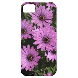 Caja púrpura del iphone de las margaritas africana iPhone 5 Case-Mate cárcasas