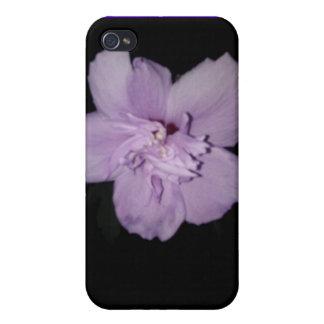 Caja púrpura del teléfono de la neblina iPhone 4 protectores
