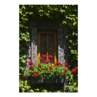 Caja roja de la flor de la ventana del geranio póster