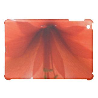 Caja roja del cojín del Amaryllis i
