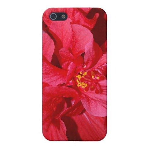 Caja roja del iPhone 5/5S del primer de la flor iPhone 5 Fundas