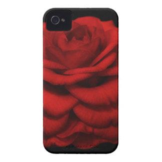 Caja roja del iPhone de la camelia iPhone 4 Case-Mate Carcasas