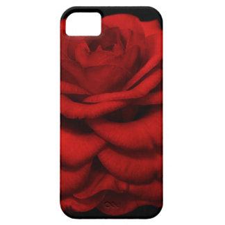 Caja roja del iPhone de la camelia iPhone 5 Fundas