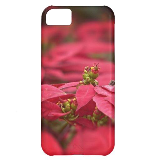 Caja roja del iPhone de la flor del Poinsettia