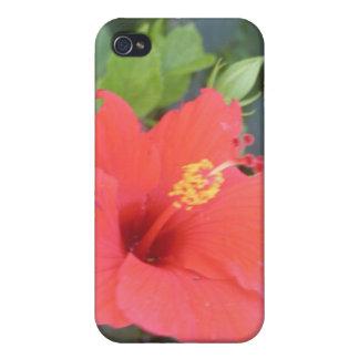 Caja roja del iPhone de la flor iPhone 4/4S Carcasas