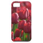 Caja roja floral del teléfono de los tulipanes iPhone 5 fundas