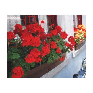 Caja roja soleada de la flor en la ventana de lona envuelta para galerias