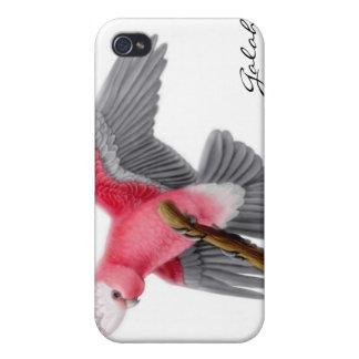 Caja rosada adaptable de la mota del Cockatoo de G iPhone 4/4S Carcasas