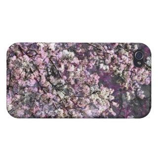 Caja rosada blanca del iPhone 4/4s de las flores d iPhone 4 Cobertura