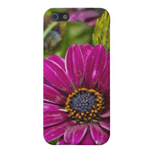 Caja rosada de la mota del iPhone 5 de la flor de  iPhone 5 Fundas