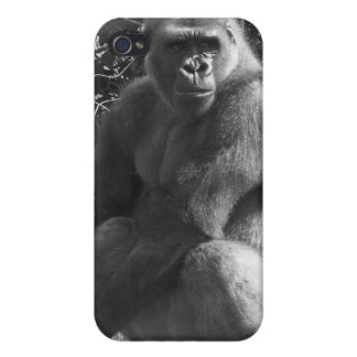 Caja salvaje del teléfono del mono iPhone 4/4S carcasas