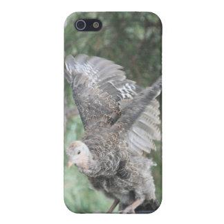 Caja salvaje joven de la mota de Iphone 4/4s del d iPhone 5 Carcasa