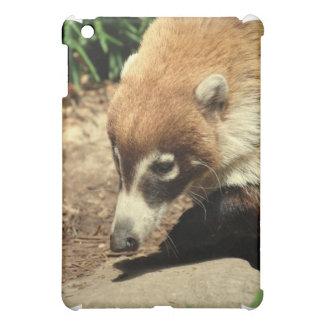 Caja sospechada blanca del iPad del Coati