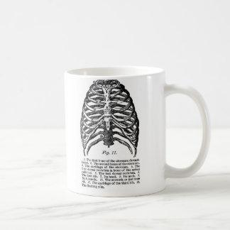 Caja torácica médica del vintage de la anatomía taza