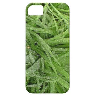 Caja verde de Iphone 5 del áloe iPhone 5 Fundas