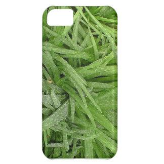 Caja verde de Iphone 5 del áloe