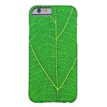 caja verde de la textura de la hoja del árbol de