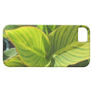 Caja verde del iPhone de Cannas que relucir iPhone 5 Cárcasa