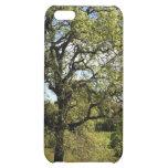 Caja verde del iPhone del árbol
