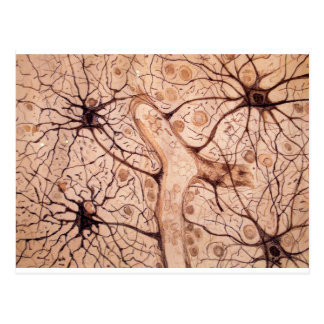 Cajal's Neurons 3 Postcard