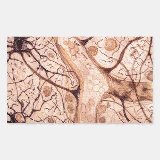 Cajal's Neurons 3 Rectangular Sticker
