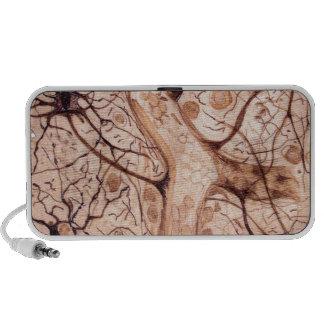 Cajal's Neurons 3 Notebook Speakers