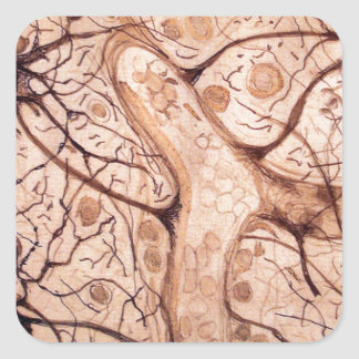 Cajal's Neurons 3 Square Sticker