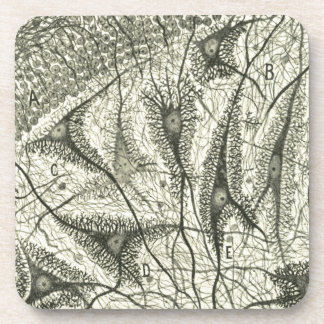 Cajal's Neurons 4 Coaster