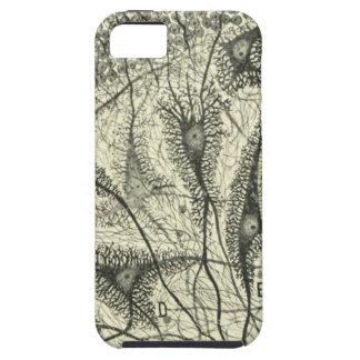 Cajal's Neurons 4 iPhone SE/5/5s Case