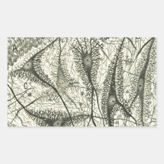 Cajal's Neurons 4 Rectangular Sticker
