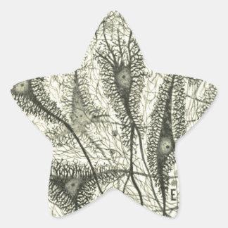 Cajal's Neurons 4 Star Sticker