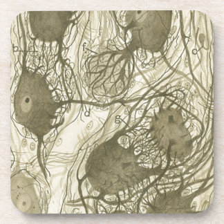Cajal's neurons 6 beverage coaster