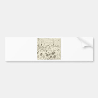Cajal's Neurons 8 Bumper Sticker