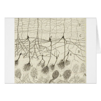 Cajal's Neurons 8 Card