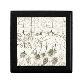 Cajal's Neurons 8 Jewelry Box