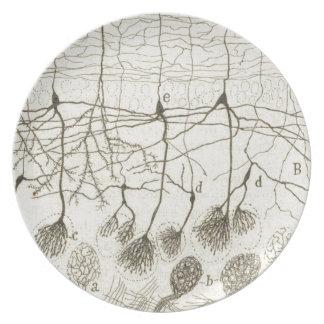 Cajal's Neurons 8 Party Plates