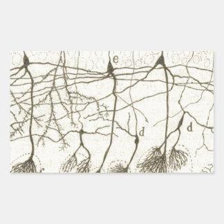 Cajal's Neurons 8 Rectangular Sticker